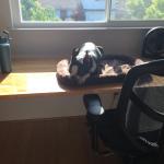 office-sitting